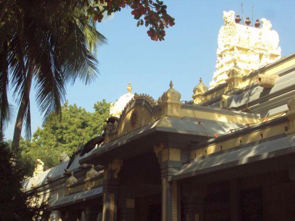 Peacocks perched atop asram temple