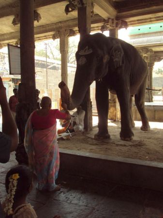 Temple elephant Rukku