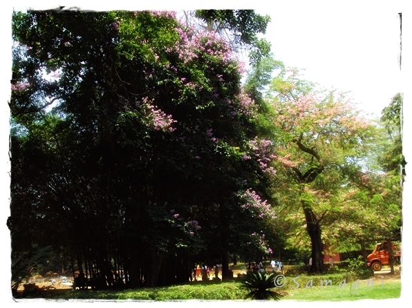 Lalbagh blooms